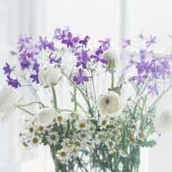 白と紫の花束.jpg