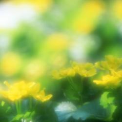 JK094_72A.jpg