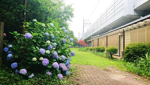 20200630_izumigaoka_01.jpg