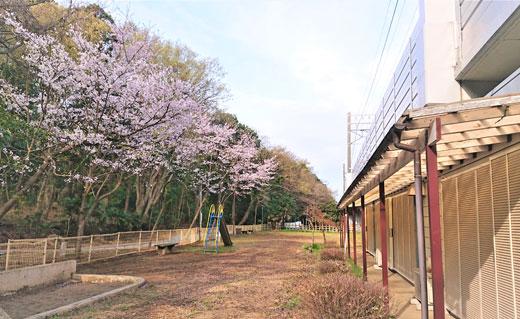 20210406_izumigaoka_02.jpg