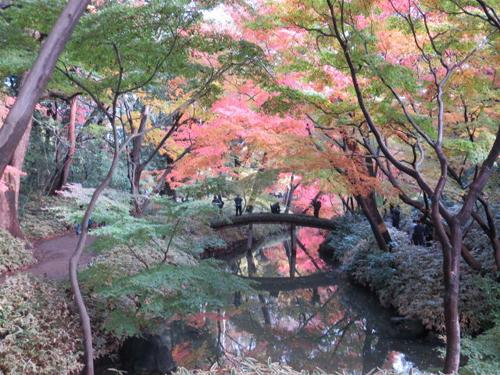 20141202_shinkoiwa5_002m.jpg